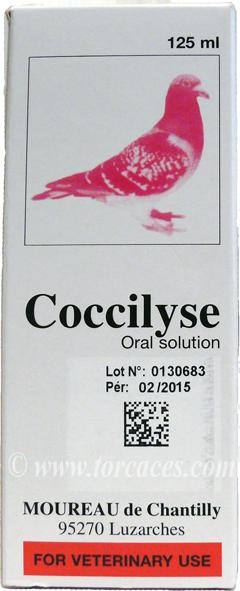 cocilyse