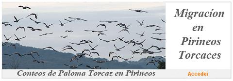 Conteo de Migracion de paloma torcaz por los Pirineos