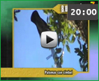 video_port_coto