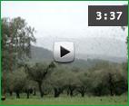 video_port_entretor